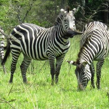 Eco Tours Uganda